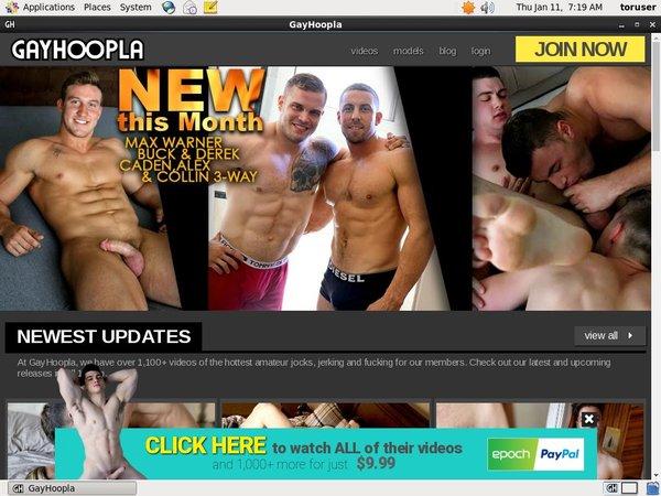 Gay Hoopla Desktop